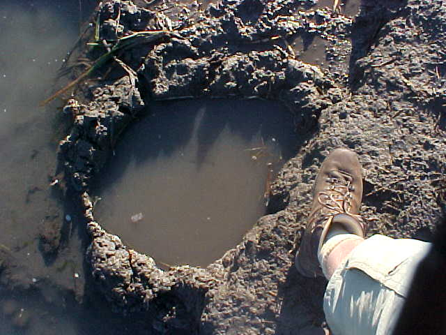 An elephant footprint next to my tent. I always thought I had small feet.