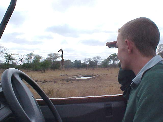 Driver David determines the age of the giraffes as they prepare to drink from a dam.