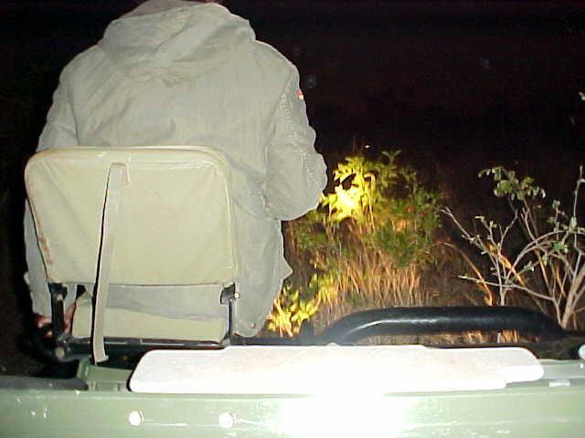 As the night set in, Philip now had to use the big flash light to spot the eye reflections of the animals in the bush.