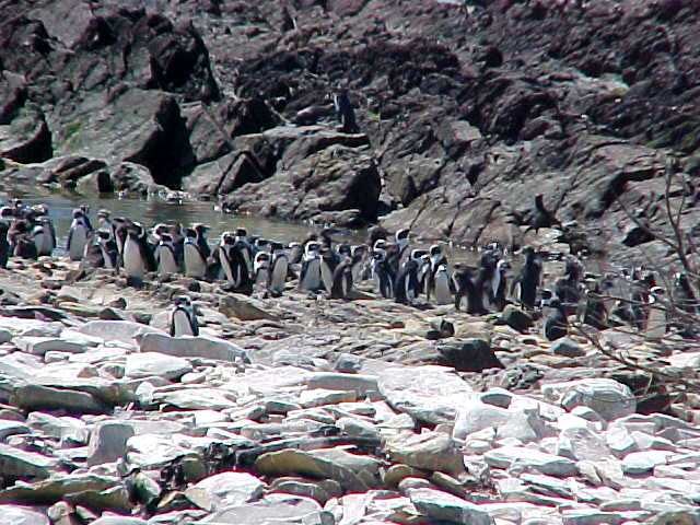 Okay, the penguins were a bit relieving after the confrontation at the former prison.