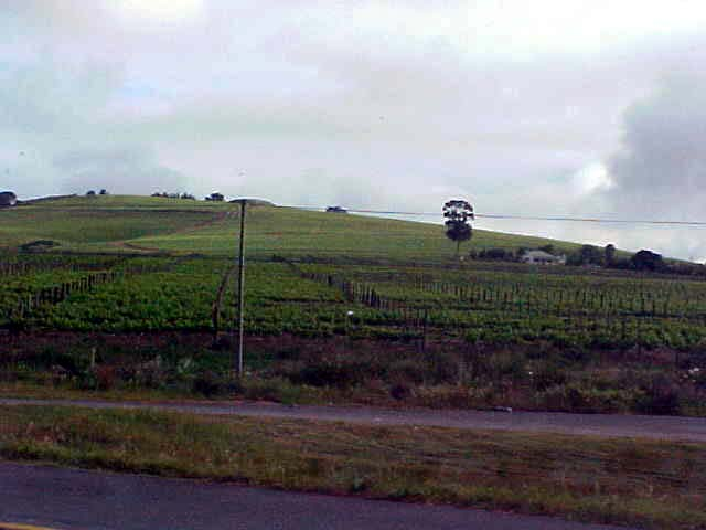 Wine farms are dotted on every hill.
