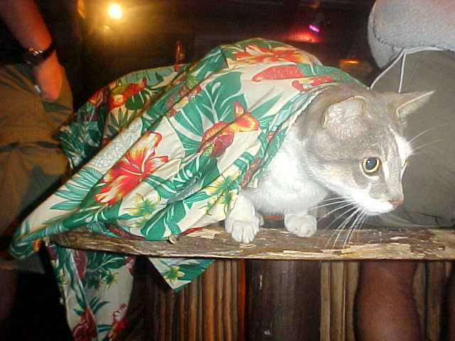 And even the cat was enjoying the Hawaiian party!