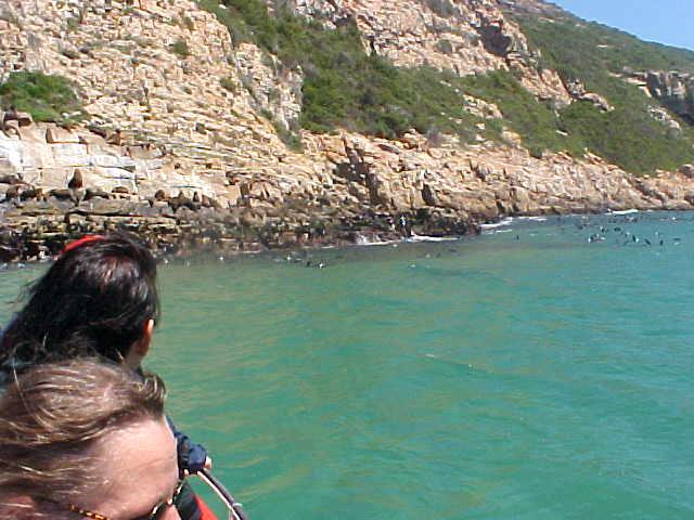 And the Robberg (rob=seal) we of course bumped into an enormous seal colony on the rocks.