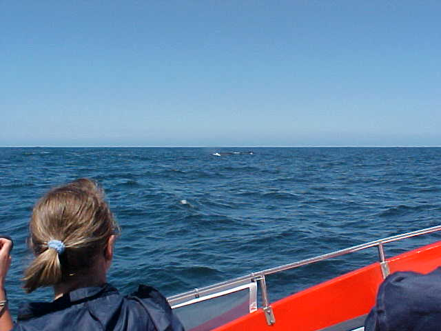 And just below the horizon you will be able to see the black spot of a whale passing by.
