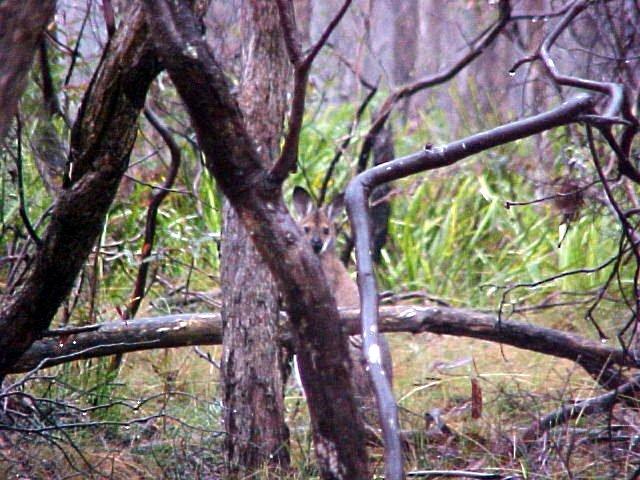 Where is the kango?