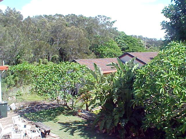 And the rest of the area is just very fine bush and rainforest.