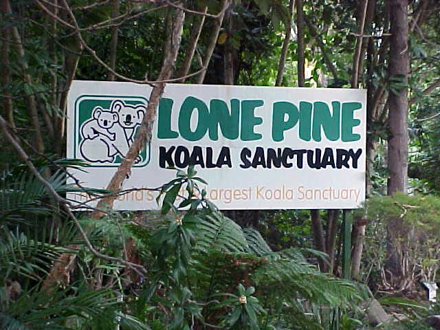 Lone Pine Koala Sanctuary, probabyl the only place in Australia where I get to see koala bears...