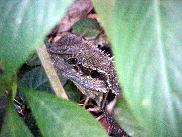 And Sue spotted this lizzard just in the wild, next to our path.