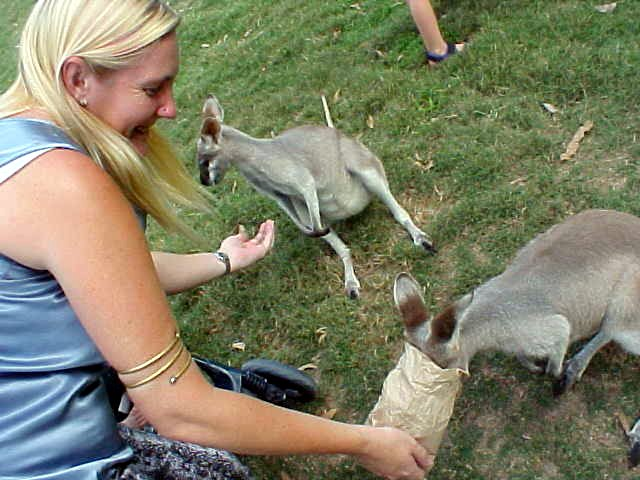 And at the Kangaroo park we got to feed the kangaroos!