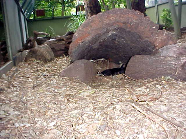 This big box had the Tasmanian Devil in it. But nobody could see him. So I set my camera on automatic and hung it over the edge, inside the box. After the photo was taken I could see that the devil was sleeping under this rock.