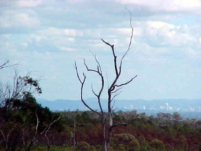 With in the distance the city of Brisbane on the mainland.