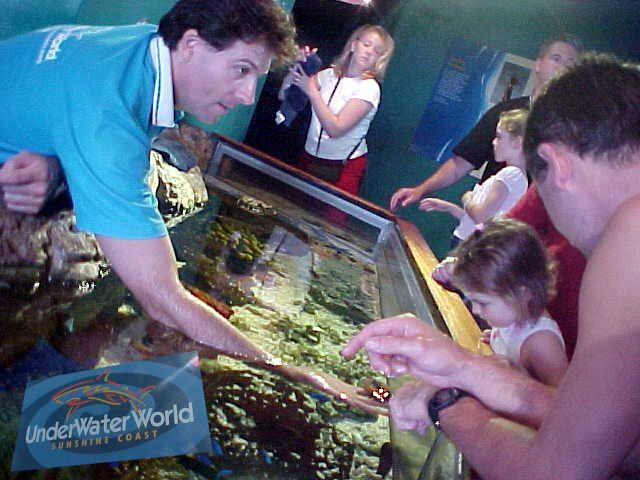 Magdalena took me along to a must-not-miss: UnderwaterWorld. Here you can not only watch fish, but even touch it!