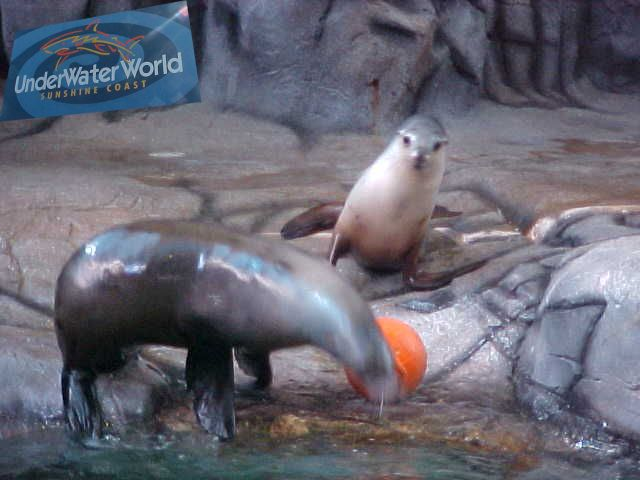 100% Super Entertainment: seals! - Hey where are you going with my orange ball?