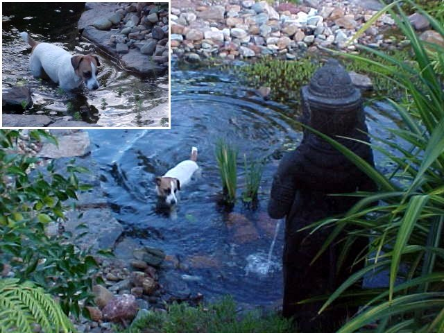 And the puppy? She loves the pond...