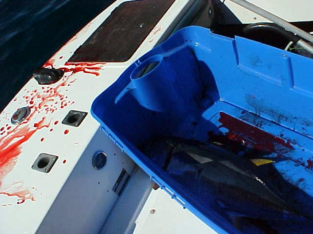 What a bloody mess that makes on the boat!