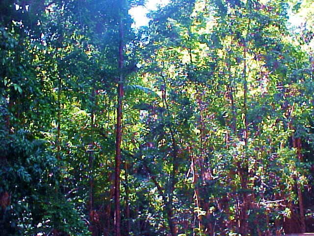 Rainforest!