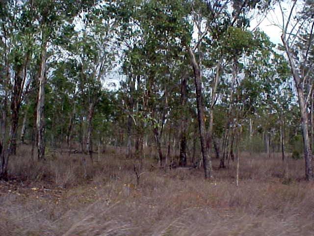 Once again, dry bush for kilometres!
