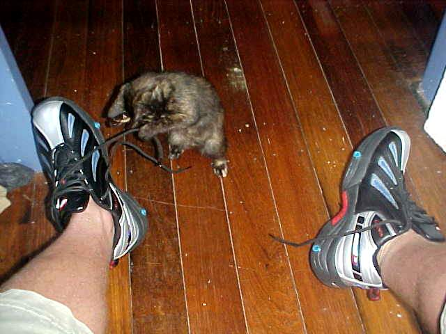 My shoes without the wheels. Even the little kitten loved it!