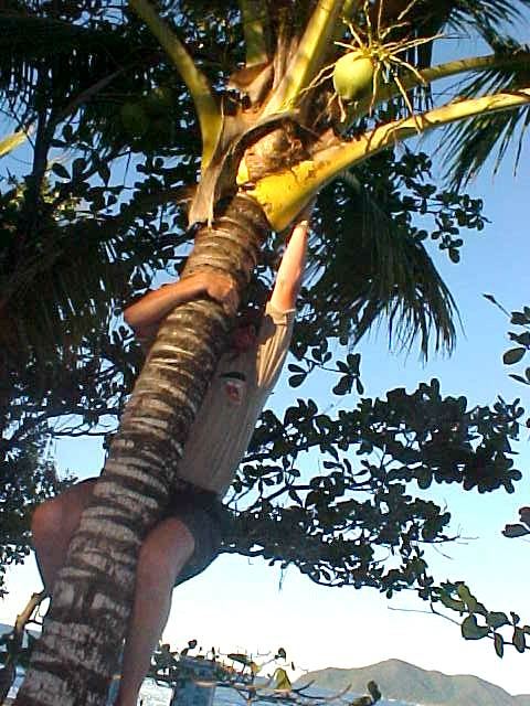 As we were talking about coconuts, Malcolm suddenly climbes in a palm tree and grabs me a coconut!
