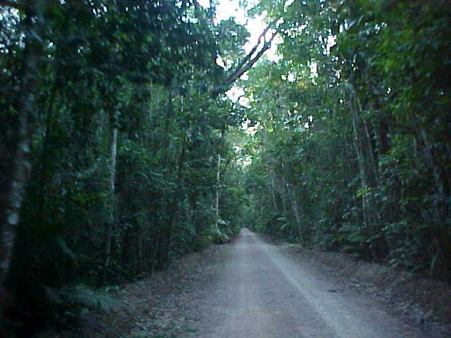Driving through another rainforest in this area, looking for thos wary birds.