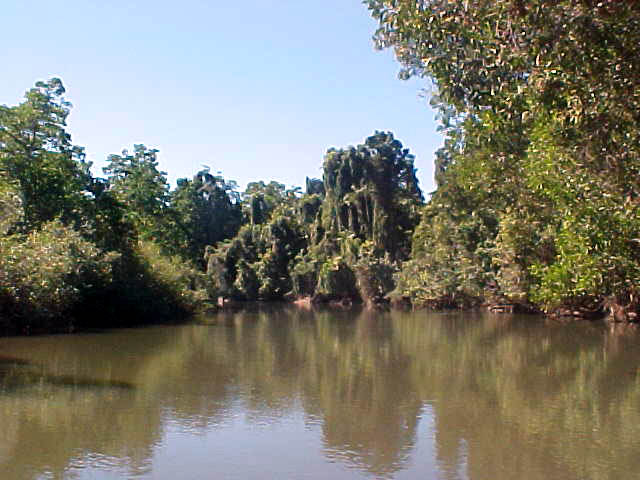 We drove the boat on this quiet tidal river, straight through the rainforest.