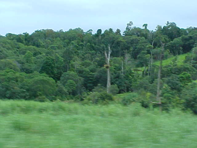 The area between Townsville and Cairns is also called the Wet Tropics, and is visable everywhere. No dusty trees here!