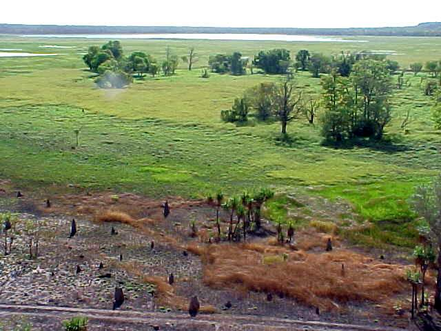 ... the wetlands (during the wet season this is all flooded)...