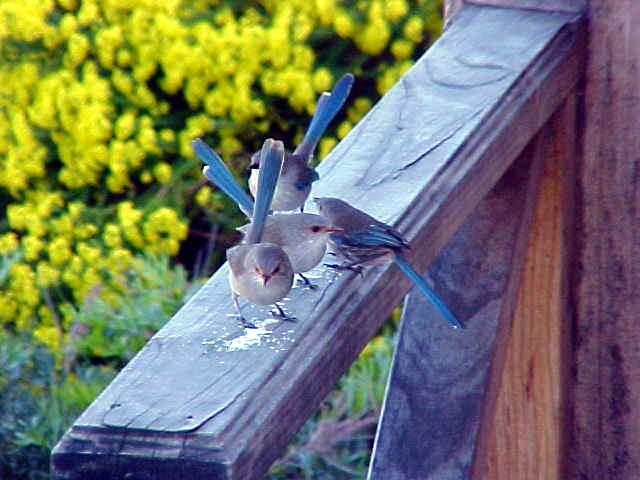 Pinky size birdies!