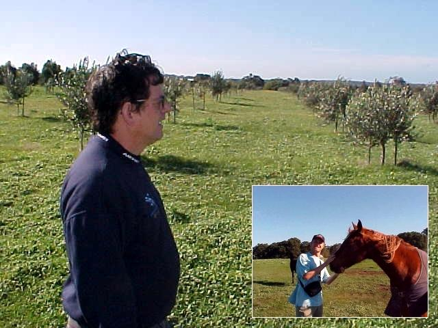 Just too late to see the kangaroos eat his olive trees. John shows me around on his piece of land. Horseys!!!