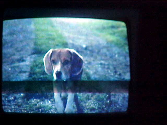 Ahhh.. Cats & Dogs in the on-board VCR!
