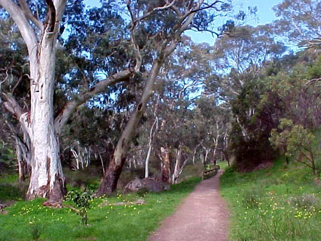 After lunch I am taken out for a good walk through the next door park all the way to the Morialta Falls.