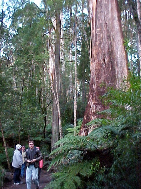 We had to travel on again and ended up at this majestic grand rainforest: Melba Gully.