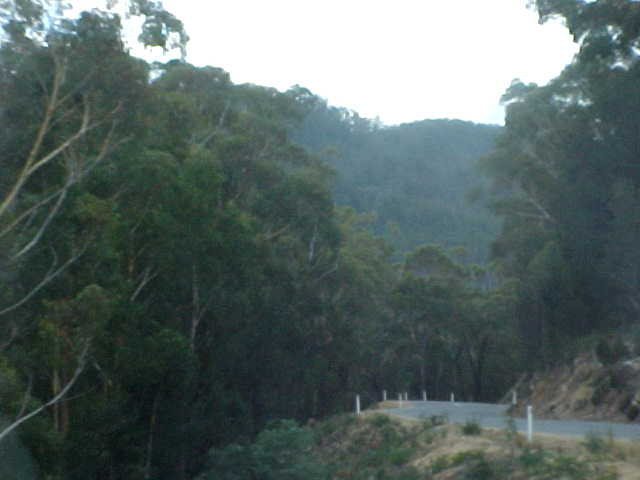 Lew drove me down the road - 30km - through this green forest... The only Tasmanian devils I saw were road kill...