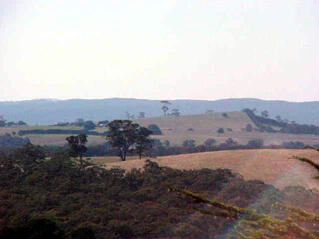 The scenery of Daylesford farmland as seen from a tower lookout.