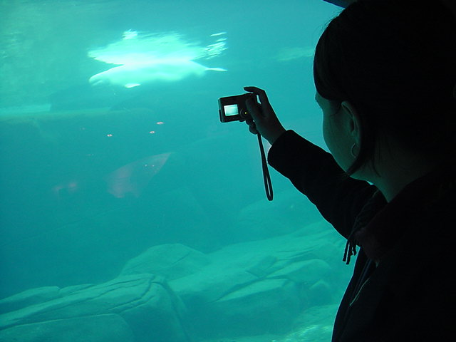 The belugas were fascinating to see, especially as there was a small little one... Fiona took photos with her own digital camera.