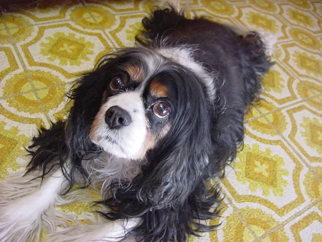 Meet the old dog Bailey.