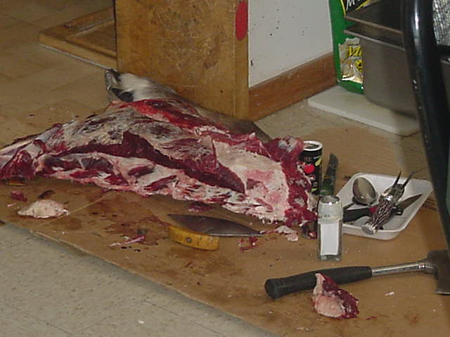 In a class room at school raw moose meat lies around on the floor.