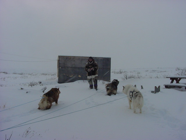 Matthew, a friend of the family, came all the way here on a tradition dog sled pulled by three huskies.