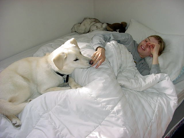Sunday morning. Royal sleep-in. Captured Becky still in bed while Nanuk wants her to get out.