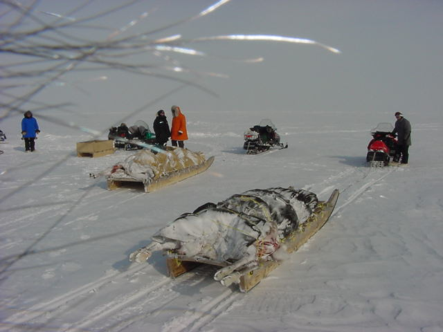 Some friends of the family just returned from a few-days hunting trip. They had killed a few caribous and stripped their fur and took along the meat on their sledges.