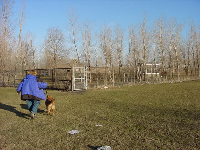 Ann had to drive by car to a special fenced off dog place along the river, where Toscane can run around freely with other dogs.