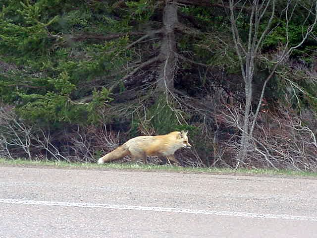 And hitchhikers on Prince Edward Island really look different than on the mainland.
