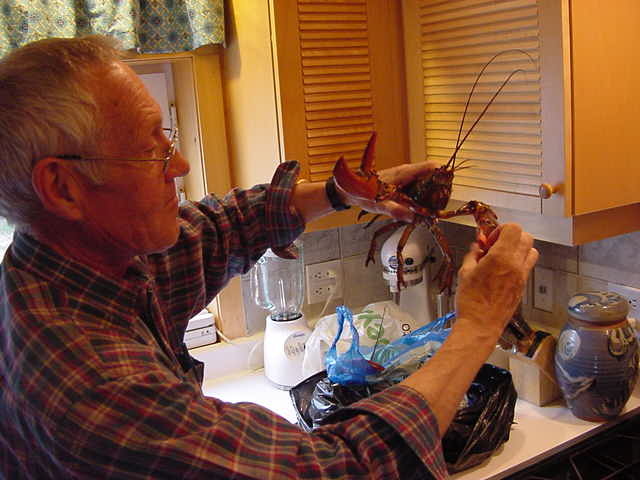 Dave finally ended up buying some lobsters at a fisher friend s house. They got them in earlier today. They look great and are alive and kicking when they are tucked into the hot and boiling water.