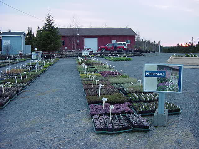 Bob and Eva run Still Meadows Greenhouses Ltd, a moderate plants nursery in town.