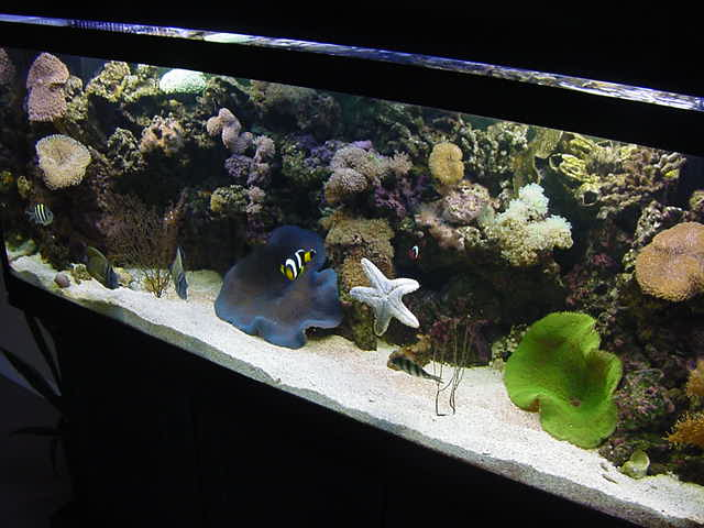 I dropped my stuff at Chris place and he showed me around in his three storey apartment. In his living room he has two large tropical fish tanks with all these coloured fish and coral in there. With fascination I looked at the live in this big tank.