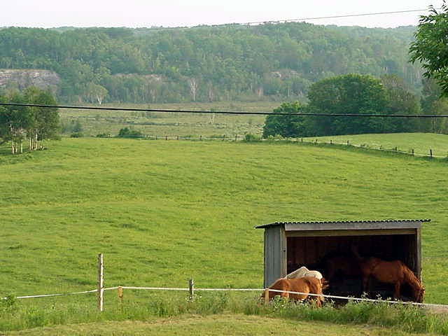 Around the house there is enough land for Cathys horses to wander around. A horse ring barn is under construction.