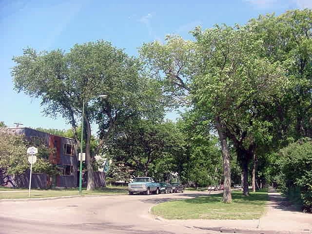 Winnipeg was so much different than I expected. There are trees in this city, everywhere I looked! I thought this was a city in the middle of the prairies, where did those trees come from?