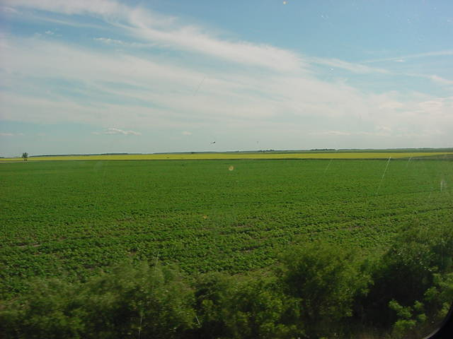 My views on the fields with canola crops as seen from the Dome car on the train.