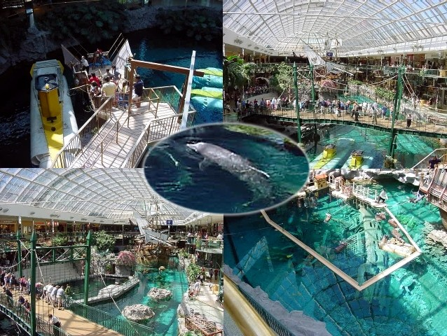 This is the worlds largest indoor lake with submarines, dolphins and the replica of Columbus Santa Maria.