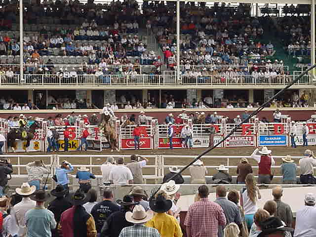 As suspected, Jeff was pretty amazed by the bronco-riding, where cowboys were going for big price money if they could hold on to a wild horse with only one hand for six seconds. The horses aren<#k#>'t wild anymore nowadays. The horses (breed for rodeos) only get this belt around their belly and when the doors of the rodeo-box opens, this belt gets tightens so tight than anyone would jump because of that.